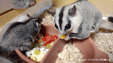 フクロモモンガの食べ物